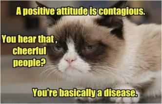 positive-cat